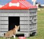 Sokak Hayvanları için Barınak ve Mama YardımıNasıl Alınır?